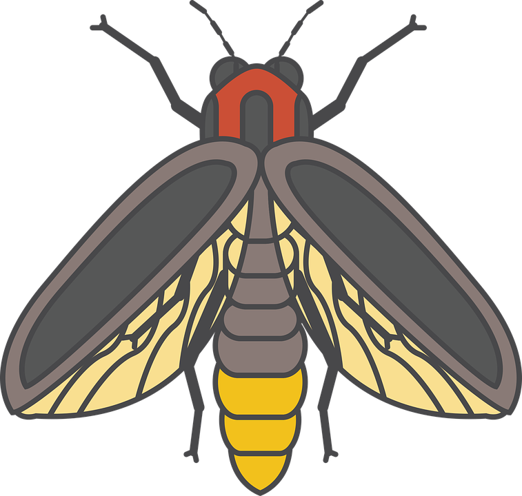 Free Vector Graphic Fire Fly Bug Insect Glow