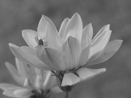 Flower, Daisy, Calendula, Flowers