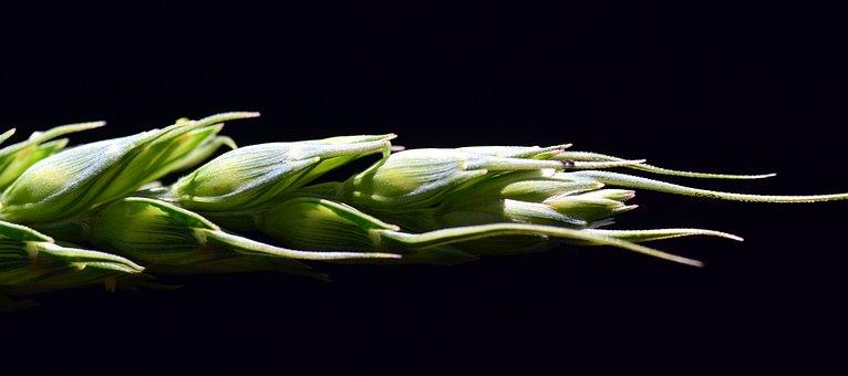 В России стартовал яровой сев: в Крыму уже посеяно порядка 2% ранних зерновых
