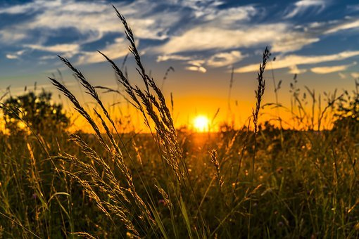 Summer, Sunset, Meadow, Nature