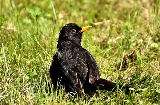 Veľké vtáky na čierne muža