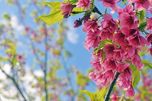 Bellissimi fiori immagini gratis su pixabay for Fiori stilizzati immagini