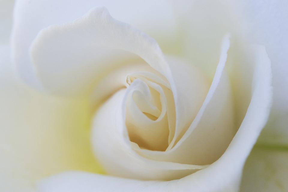 Blanc Fleur Blanche Neige Photo Gratuite Sur Pixabay