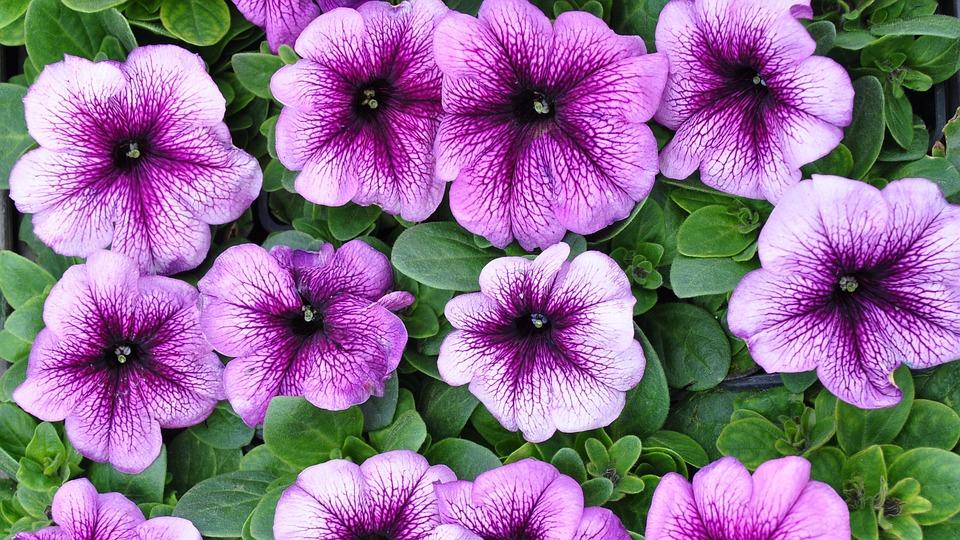 Garden Flowers Summer Purple   Free Photo On Pixabay