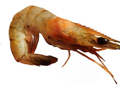 Shrimp, Paella, Prawns, Crustaceo