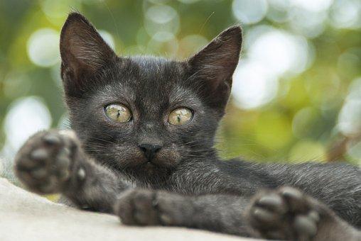 Cat, Eye, Green, Animal Portrait, Animal