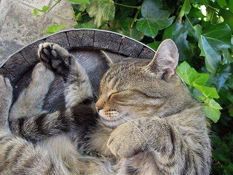 Katze, Kätzchen, Getigerte Katze