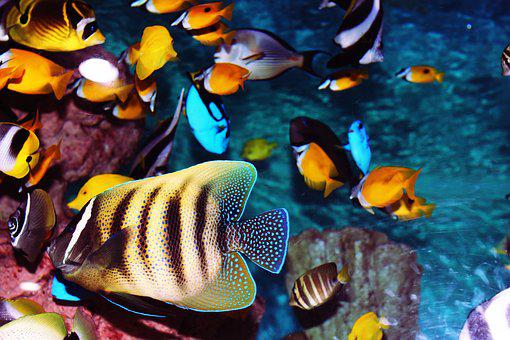 Tropical Fish, Aquarium, Fish, Fish Tank