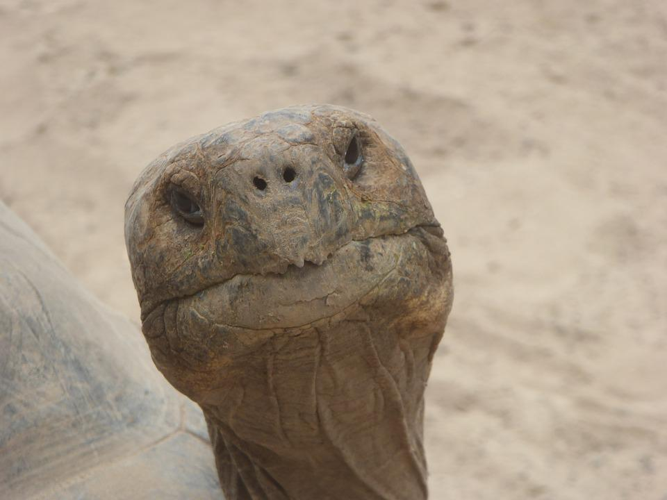 Una foto de Morante cada día - Página 5 Turtle-2396732_960_720