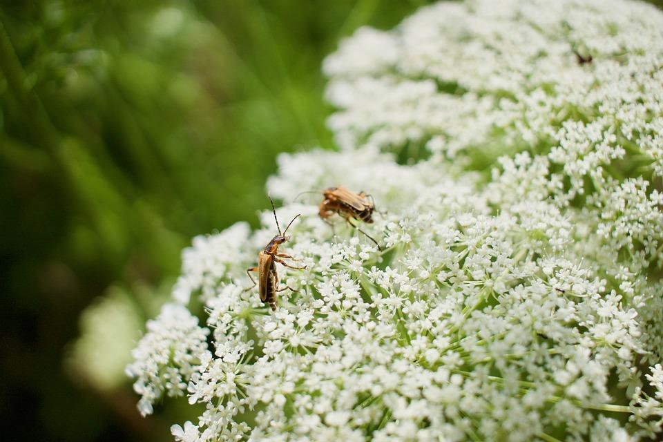 Flowers Bugs White Free Photo On Pixabay