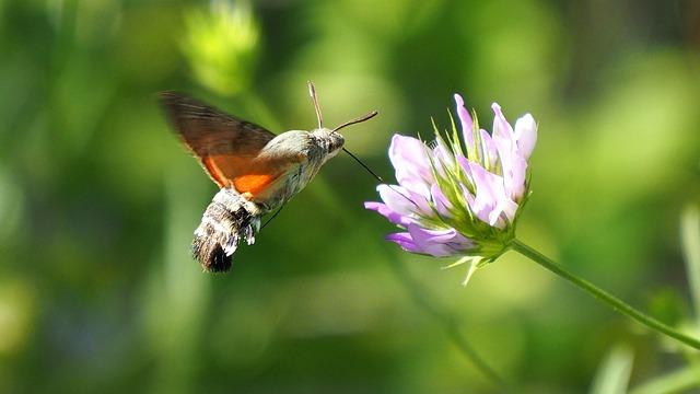 Nature Butterfly Hummingbird 183 Free Photo On Pixabay