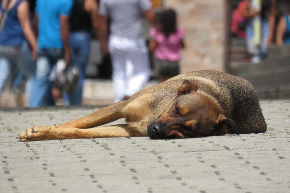 Limpian las calles de perros callejeros con motivo de la visita de los Reyes de España