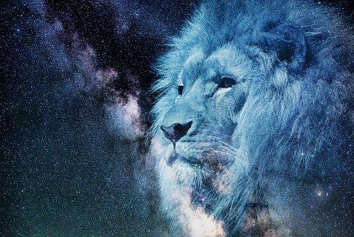 Löwe, Sternenhimmel, Nacht, Blau, Tier