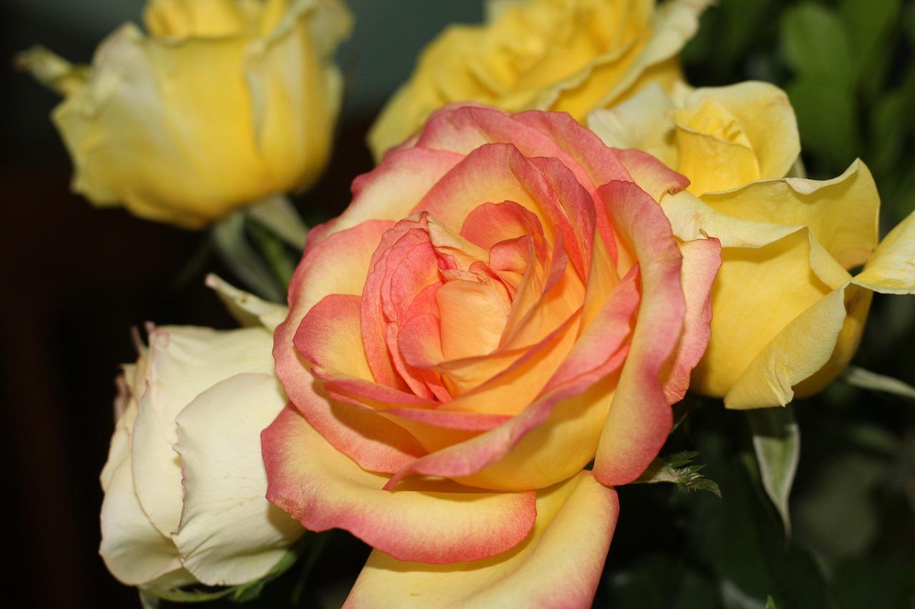 желто-розовые розы картинки секта представляет собой