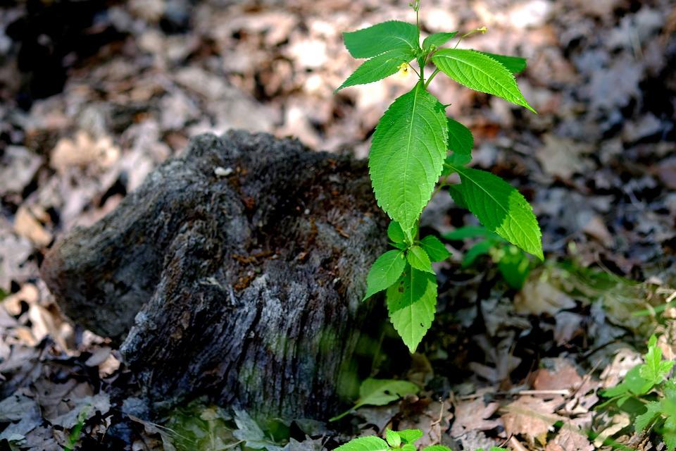 Planta, Verde, Natureza, Fechar, Mortos Toco De Árvore