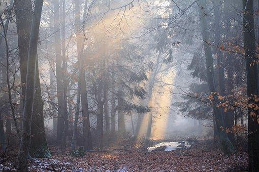 Sonne, Sonnenstahl, Wald, Stimmung