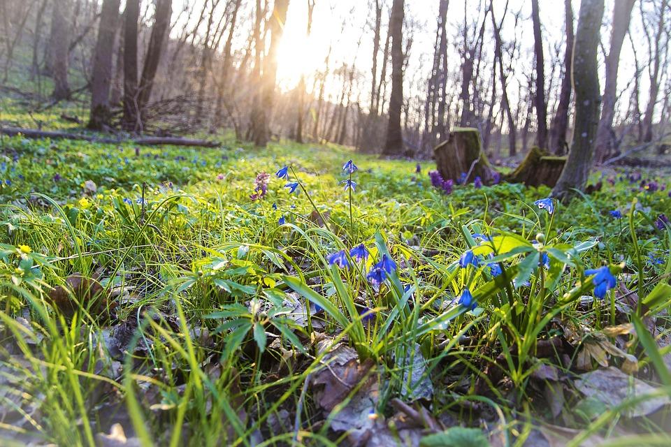 Spring Nature Flowers Free Photo On Pixabay
