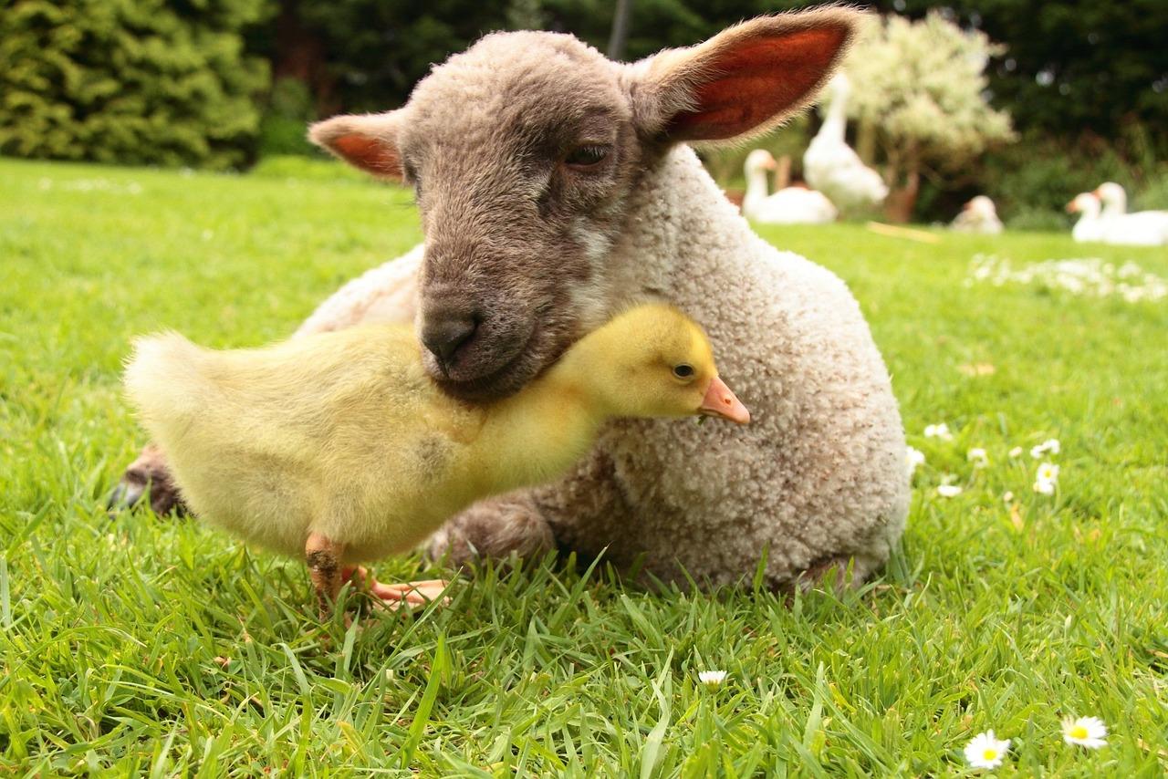 уверена, домашние животные фотографии картинки применение возможно лечебных