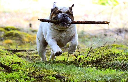 Dog, Pet, Batons, Fun, Mammal, Young Dog