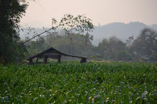 Thailand, Field, Nature, Landscape, Asia