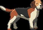 dog, hound, mammal