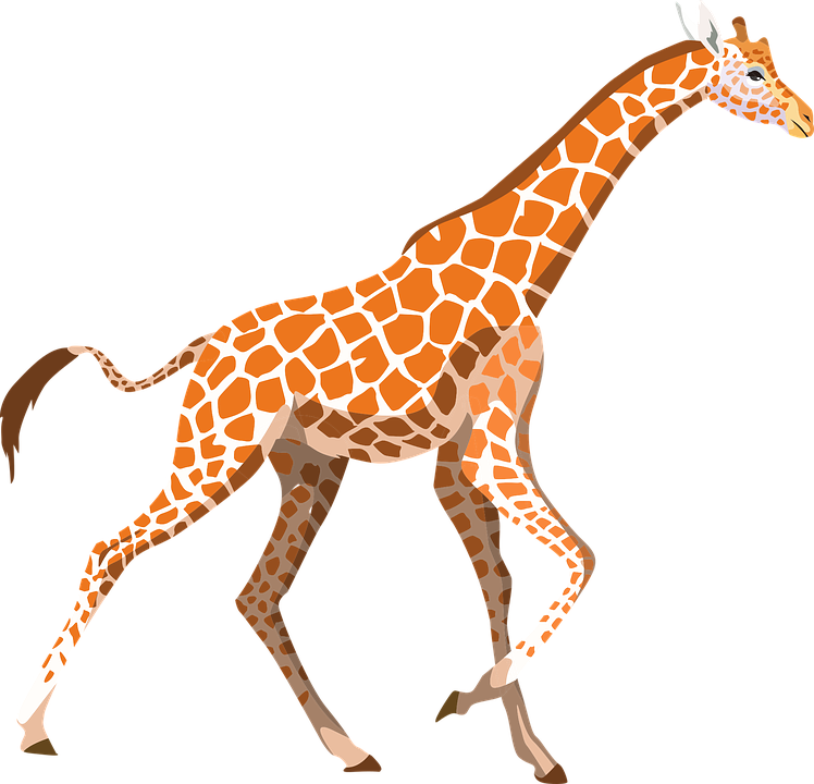 Giraffe Free pictures on Pixabay