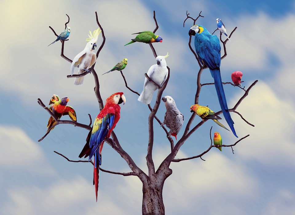 Parrots Birds Colors Free Photo On Pixabay