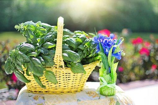 Basil, Herb, Fresh, Organic, Vegetarian