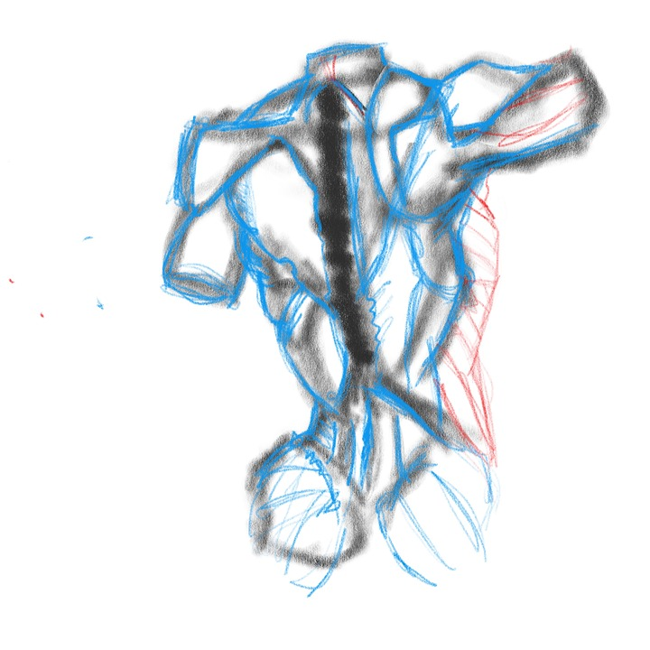 Anatomie Skizze · Kostenloses Bild auf Pixabay