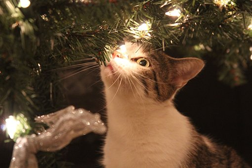 Kitty, Christmas, Cat, Lights, Brown Cat