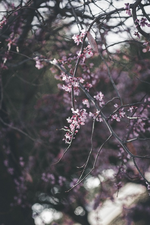 Pink flowers tree free photo on pixabay pink flowers tree branch dark spring mightylinksfo