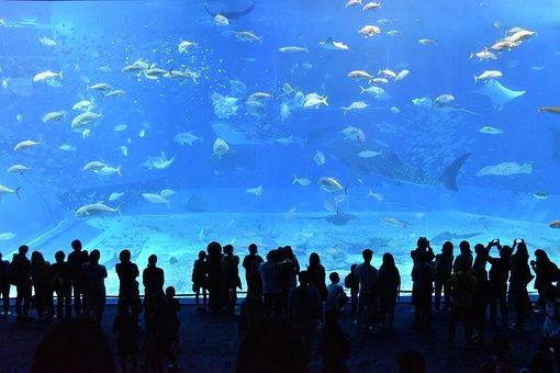 美ら海水族館, 水族館, 水槽, 沖縄, 沖縄, 沖縄, 沖縄, 沖縄, 沖縄