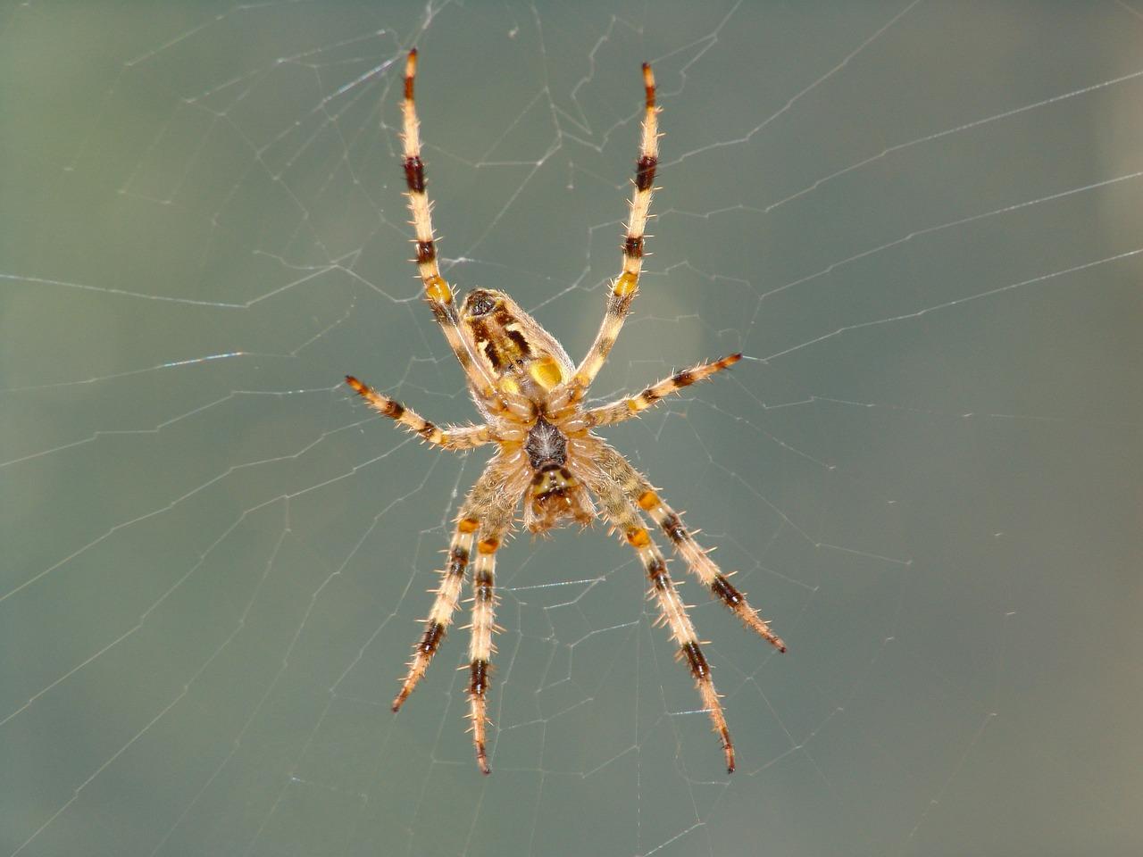 Как узнать по фото паука