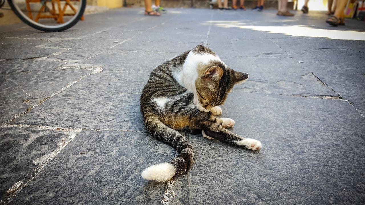 Flutd cats cornell