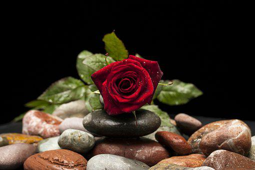Rose, Red, Flower, Macro, Nature, Close