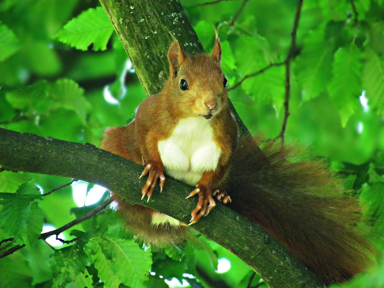 фото животных широколиственных лесов общем