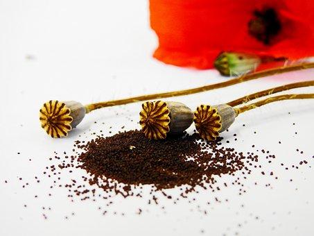 Poppy, Poppy Capsule, Flower, Blossom