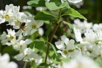 bee, flower, bud