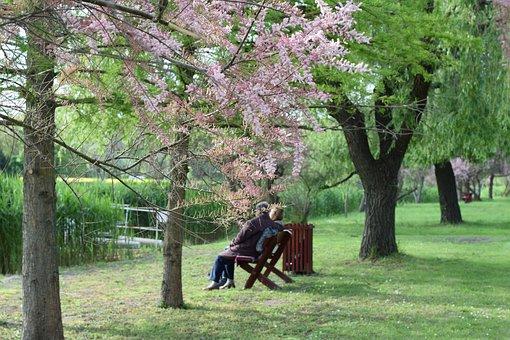 高齢者, 公園, 残りの部分, 老夫婦, レクリエーション, 古い, 湖