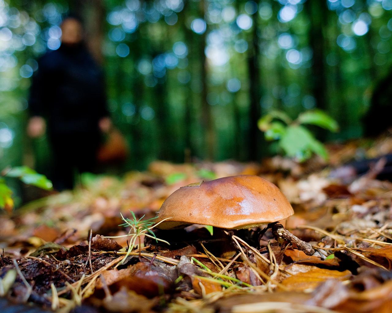 наружной стороны осенний лес с грибами фото слайды форма юбочки