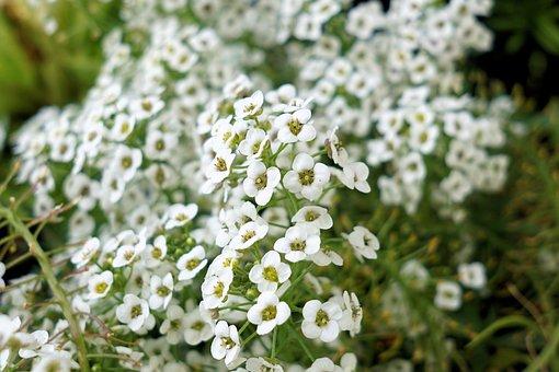 Fleurs, Plantes, Nature, Petits, Blanc