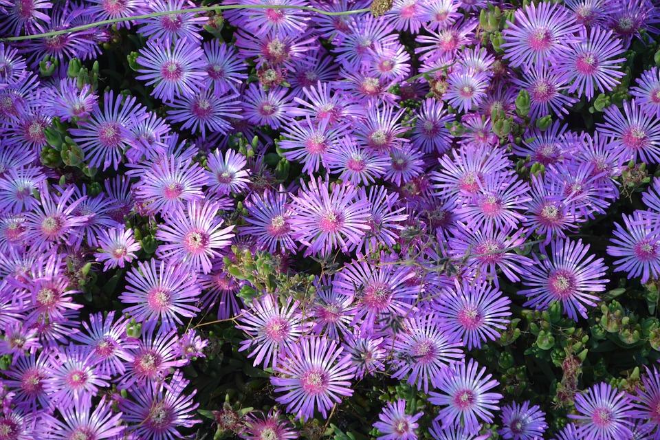 Flowers pretty spring free photo on pixabay flowers pretty spring nature petals garden mightylinksfo Choice Image