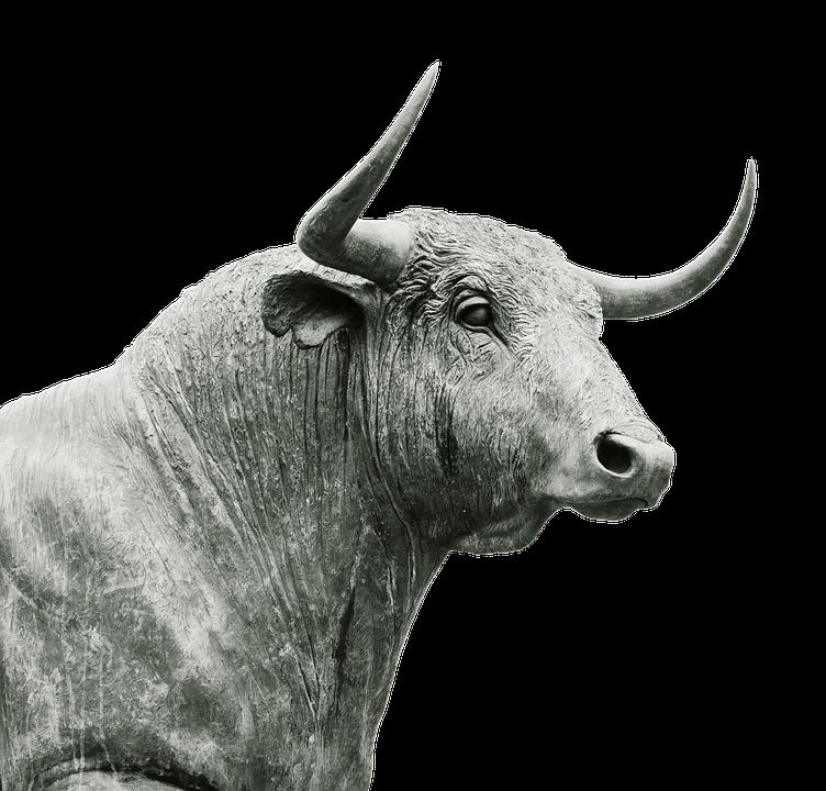 Bull Horns Livestock - Free photo on Pixabay