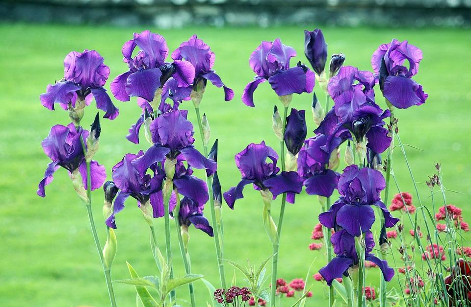 Garten pflanzen  Kostenloses Foto: Blumen, Lilien, Garten, Pflanzen - Kostenloses ...