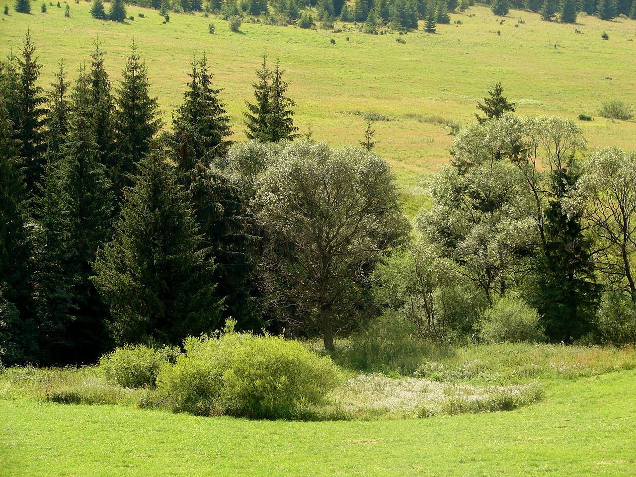 лес с лугами картинки совсем несложно приготовить
