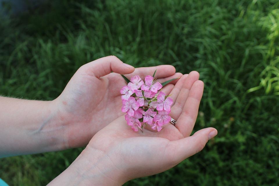 のひとつの手のひら, ピンクの花, マイナーな穀物, マクロ