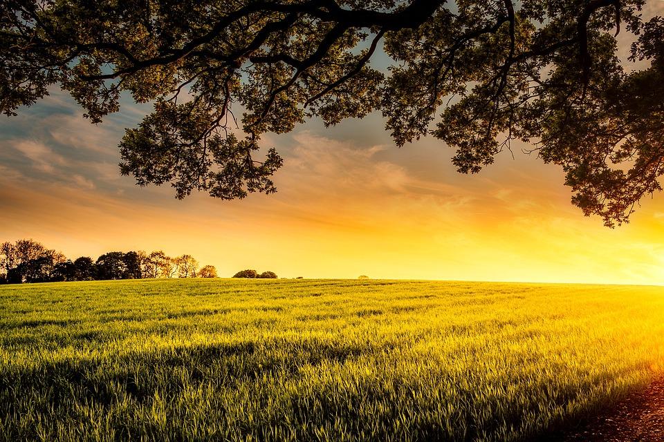 Sunset, Dusk, Meadow, Field, Farm, Trees