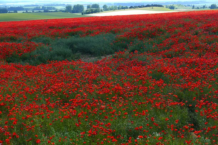 ринопластики картинки с полем красными цветами и дорогой дальнейших успехов