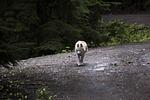 husky, dog, canine