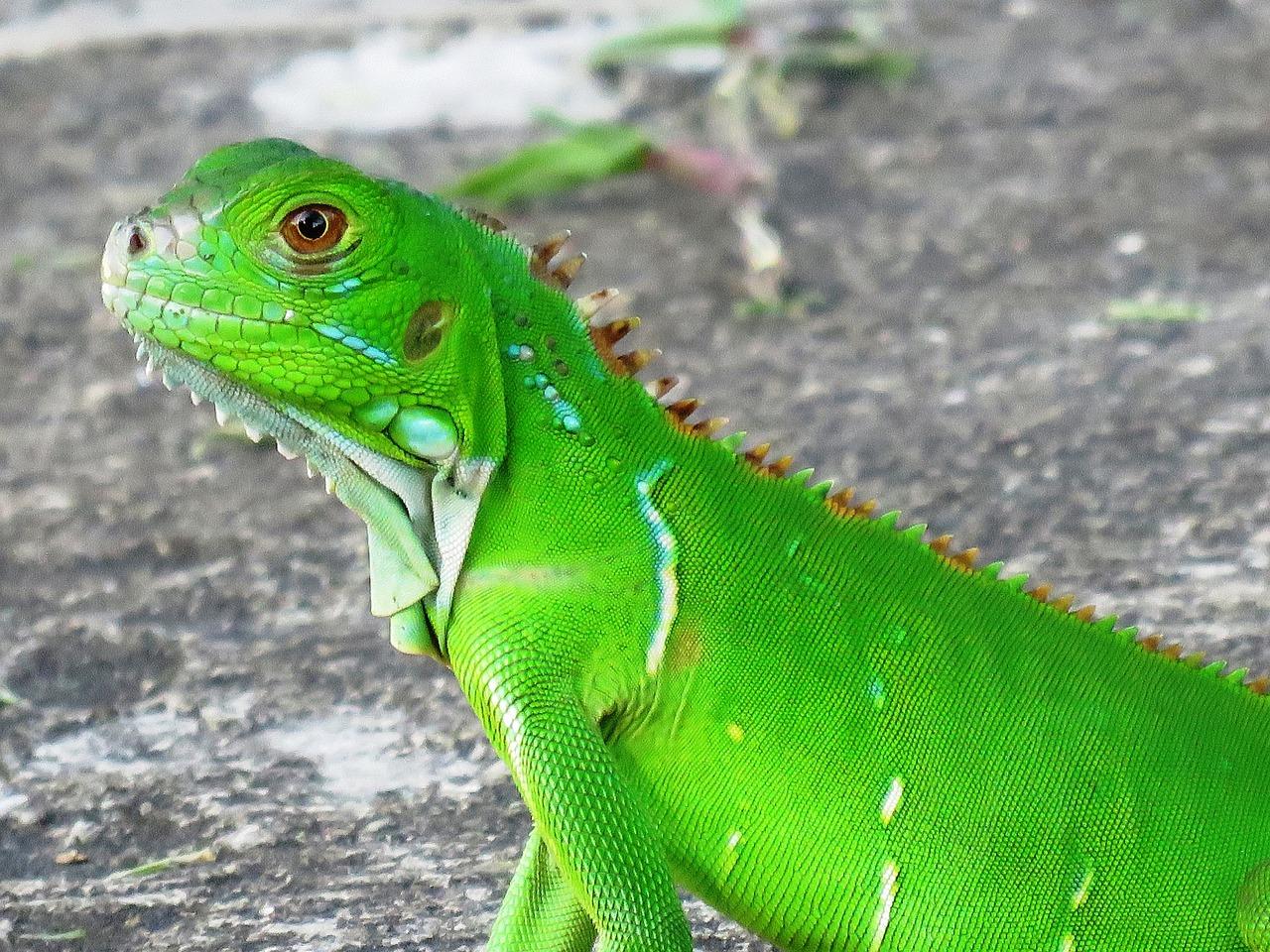 Зеленый ящер фото